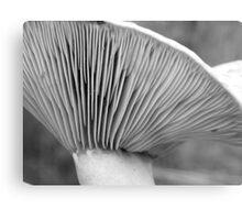 Saffron gills (black/white) Metal Print