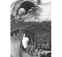 Archived Skull Photographic Print