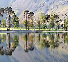 Sunrise over 'The Buttermere Pines' by Martin Lawrence