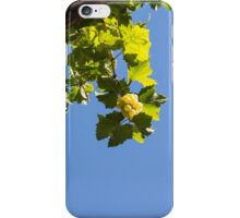 Blue Sky Grape Harvest - Thinking of Fine Wine iPhone Case/Skin