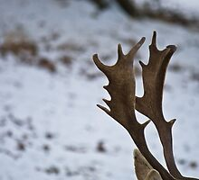 The Stag by photoart1