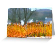 Moss on Wall Greeting Card