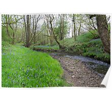 Bluebells By The Brook. Poster