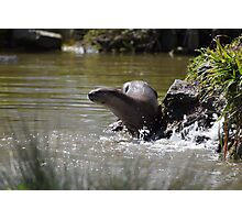 Otter Ready for a Swim Photographic Print
