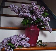 Lilacs  by Jeff Stroud