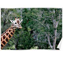 Giraffe No.1 Poster