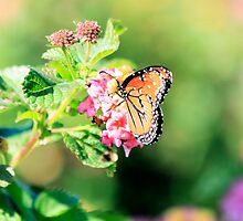 Berenice (Queen) Butterfly III by LorriCrossno