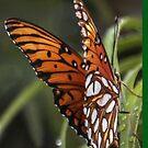 Butterflies Are Free, Throw Pillow by heatherfriedman