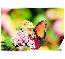 Berenice (Queen) Butterfly II Poster
