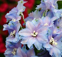 Purple Flowers by Alison Hindenlang