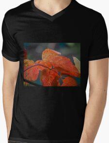 Autumn Foliage in Australia Mens V-Neck T-Shirt