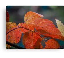 Autumn Foliage in Australia Canvas Print