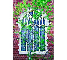 Stained Glass in Spring Photographic Print