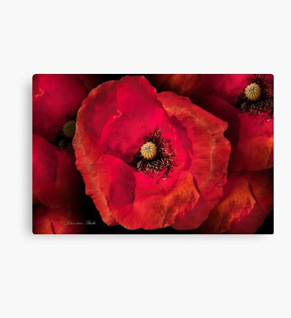 ... a poppy and Photoshop...   Canvas Print