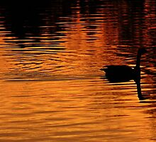 Dawn's Golden Touch by Shilohlin Pfeiffer