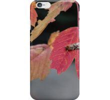 Autumn Foliage in Australia 2 iPhone Case/Skin