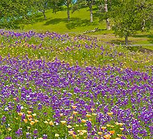 Luines and Poppies and Lupines and Poppies by John Butler