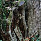 Just a tree in the forest or ??? by Rainydayphotos