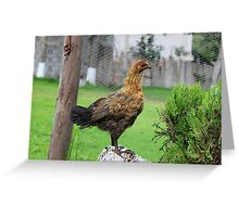 Brown Chicken on a Roost Greeting Card