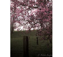 Pastoral Blossoms Photographic Print