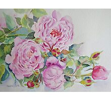 More roses Photographic Print