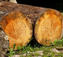 felled tree trunks by mrivserg