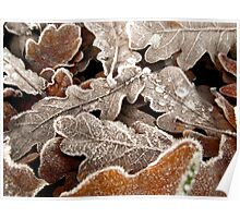 Frosty autumn leaves Poster