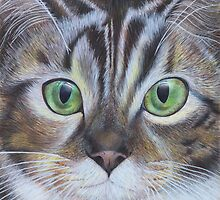 Cat's face close up by Marion Yeo