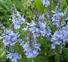 Wildflowers by demonkourai