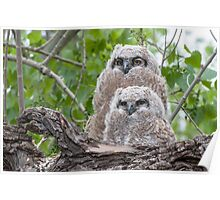Owl siblings Poster
