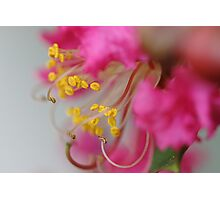 Yellow pollens and stamens of pink flower Photographic Print