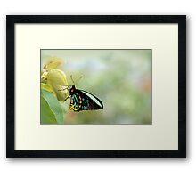 Birdwing Poser Framed Print