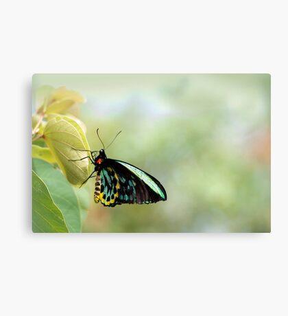 Birdwing Poser Canvas Print