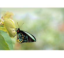 Birdwing Poser Photographic Print