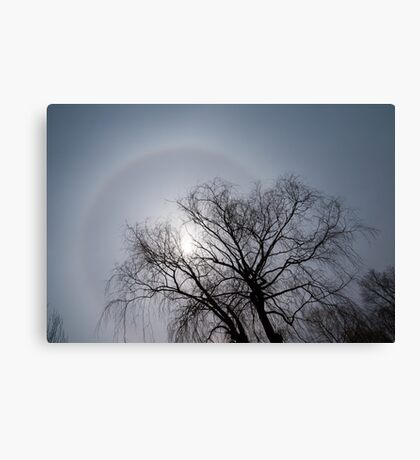 Sun Halo, Trees And Silver Gray Winter Sky Canvas Print