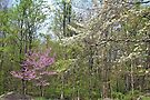 Springtime In The Woods by MotherNature