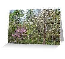Springtime In The Woods Greeting Card