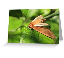 Moth on a Plant Greeting Card