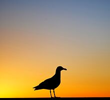 Sea Gull Sunset by RichCaspian