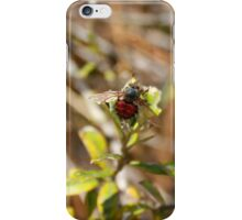 Bee With Red Abdomen iPhone Case/Skin