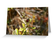 Bee With Red Abdomen Greeting Card