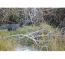 Desolate Area Alligator Photographic Print