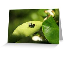 Fly on a Plant Greeting Card