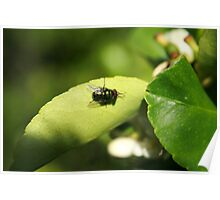 Fly on a Plant Poster