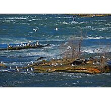 Seagull's Flock - Hells Half Acre | Niagara Falls, New York Photographic Print