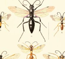 Aid to the identification of insects Charles Owen Waterhouse 1890 V1 V2 136 Various Sticker