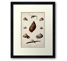 Proceedings of the Zoological Society of London 1848 - 1860 V5 Mollusca 002 Framed Print