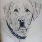 Dog by Steve Osment