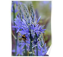 Bee on Blue Poster