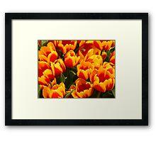 Fire Tulips Framed Print